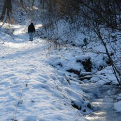 26.I Zimowy spacer na Obryw Skalny w Bardzie.