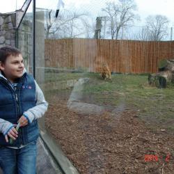 W ZOO najpierw idziemy zobaczyć tygrysa, bo potem może być tak jak ostatnim razem czyli nie zobaczymy go wcale. Łukasz podekscytowany długo podziwia swojego kotka, chodząc od szyby do szyby.